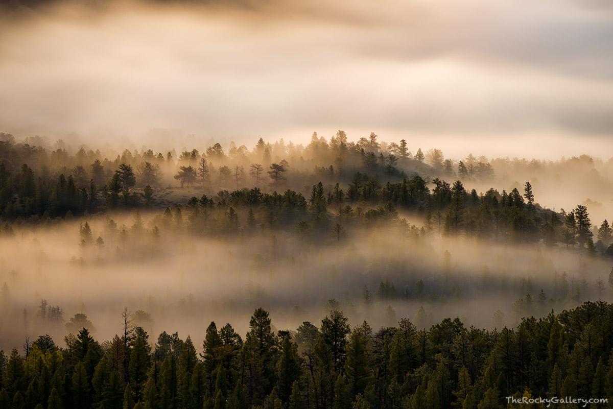 Moraine Park,Beaver Mountain,Sunrise,Fog,RMNP,Colorado,Estes Park,Rocky Mountain National Park,Landscape,Photography,Trees,May,Spring,Eagle Cliff Mountain,Ponderosa , photo