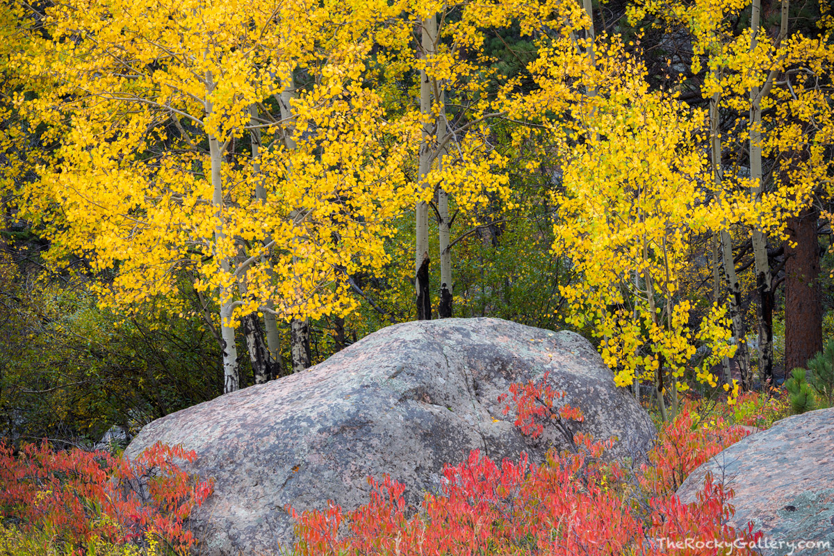 Moraine Park,September,Aspen,Big Thompson River,Bear Lake Road,Landscape,Photography,Colorado,RMNP,Rocky Mountain National Park,Fall,Autumn,Estes Park,Aspens, photo
