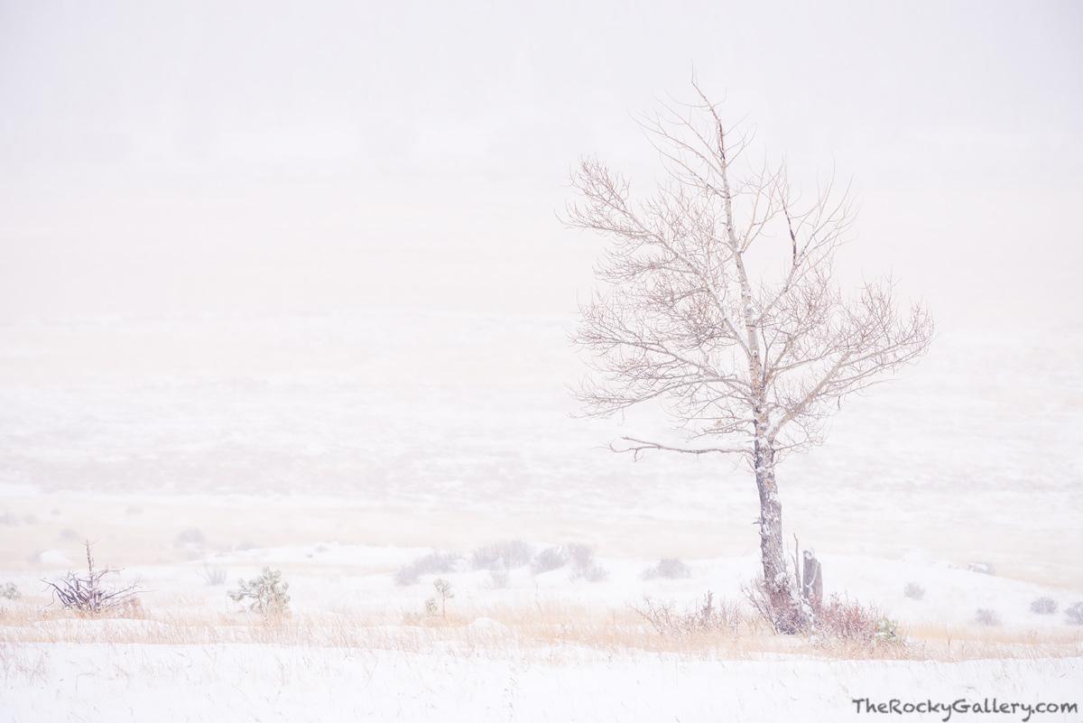 Moraine Park,November,RMNP,Bear Lake Road,Estes Park,Colorado,Rocky Mountain National Park,Tree,Aspen,Landscape,Photography,Winter,Snow, photo