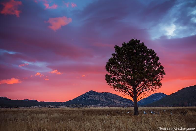 Moraine Park,Sunrise,December,Tree,Rocky Mountain National Park,Colorado,Estes Park,RMNP,Landscape,Photography,Winter,Ponderosa,Pine,Bear Lake Road , photo