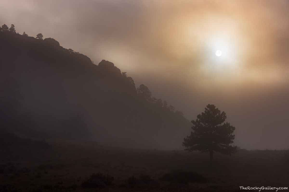 RMNP,Estes Park,Bear Lake Road,Moraine Park,Colorado,Rocky Mountain National Park,Fog,Morning,Mystical,Landscape,Photography,October,Elk,rut, photo