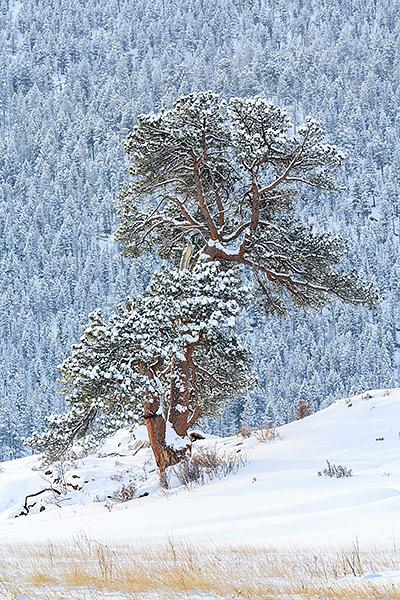 Rocky Mountain National Park,Colorado,Moraine Park,Trees,snow,winter,Big Thompson,River,photograph,mountains,fire,flood, photo