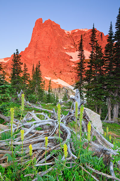 Rocky Mountain National Park, Colorado, Notchtop Mountain, Sunrise, Wildflowers, Grace Falls, Summertime,bracted lousewort, photo