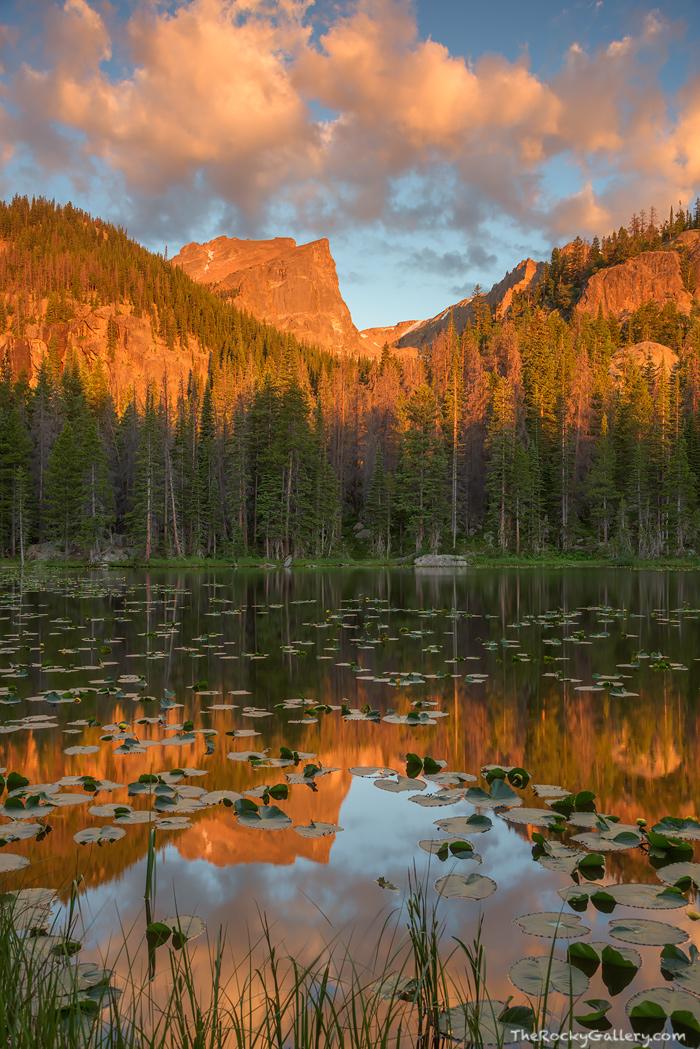 Rocky Mountain National Park, Nymph Lake, Hallett Peak, Bear Lake, Estes Park,RMNP,Colorado,Sunrise,Reflections,Landscape,Photography,Trailhead,Dream Lake,Bear Lake Road , photo