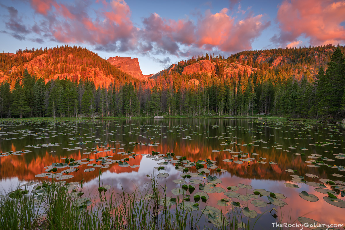 Nymph Lake,Hallett Peak,Sunrise,Reflection,Pond lilies,Bear Lake,Hiking,Trailhead,RMNP,Rocky Mountain National Park,Estes Park,Landscape,Photography,July,Dream Lake,summer, photo