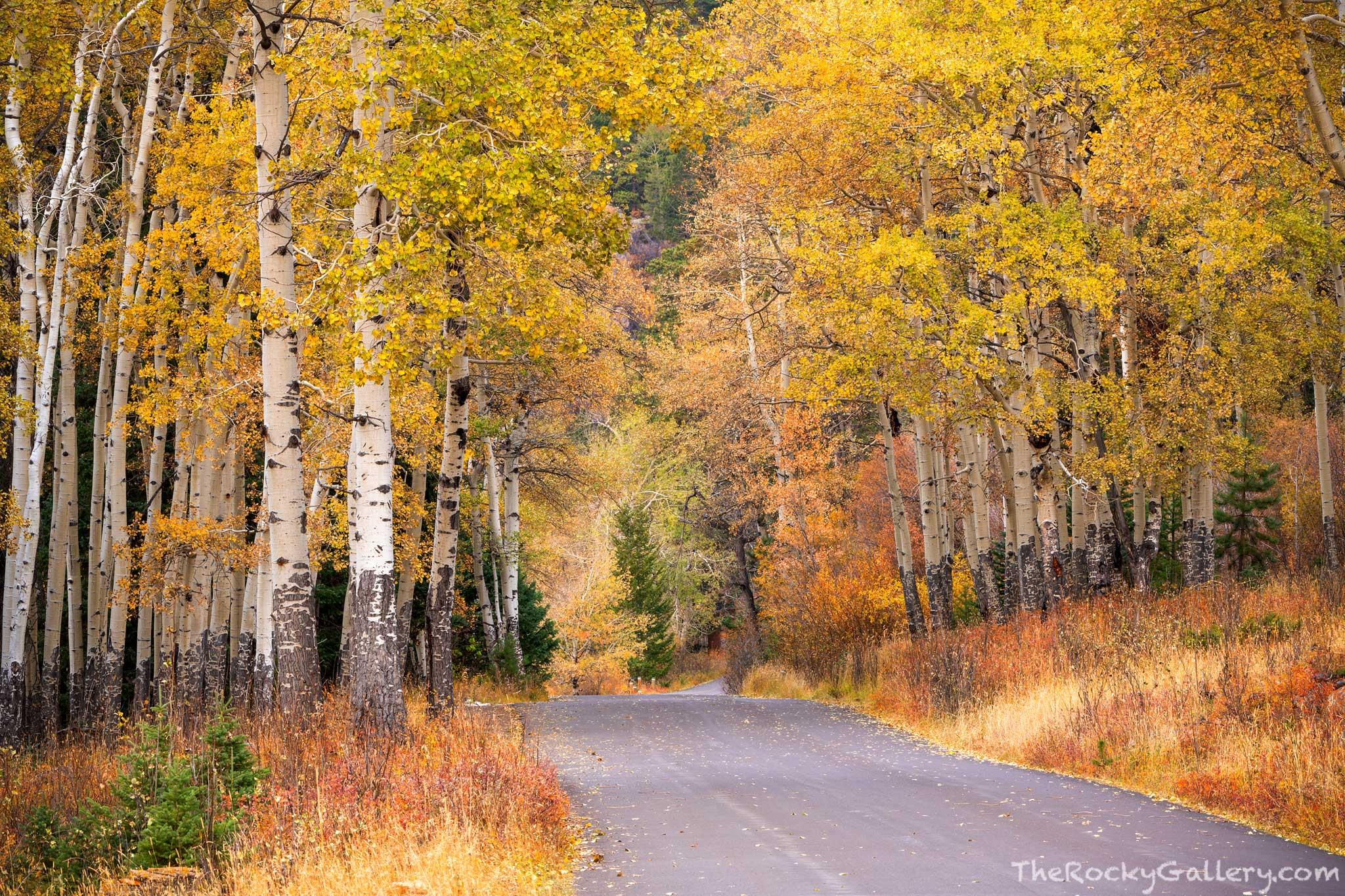 Old Fall River Road,Horseshoe Park,Estes Park,RMNP,Colorado,October,Autumn,Fall,Aspens,Elk,Landscape,Photography,Rocky Mountain National Park,Trail Ridge Road,Road,Hand of Man , photo