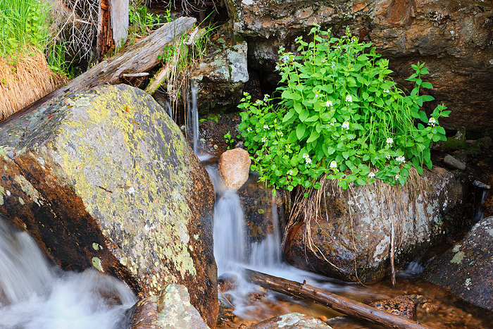 Ouzel Falls, North Saint Vrain, Creek, Wild Basin, Rocky Mountain National Park, Colorado, Waterfalls, Wildflowers, photo