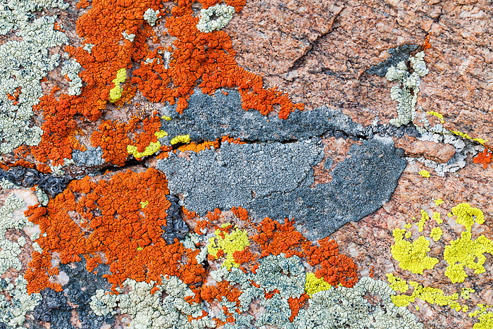 Rock cut,Rocky Mountain National Park,Colorado,lichen,winter,summer,treeline, photo