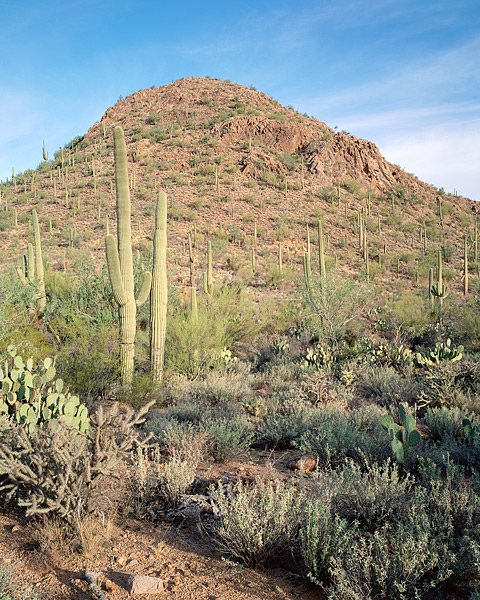Saguaro National Park, Arizona, Sonoran Desert, Tucson, photo