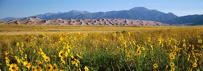 Great Sand Dunes, National Park, Sunflowers, Panoramic, Alamosa, San Luis Valley, Colorado, photo