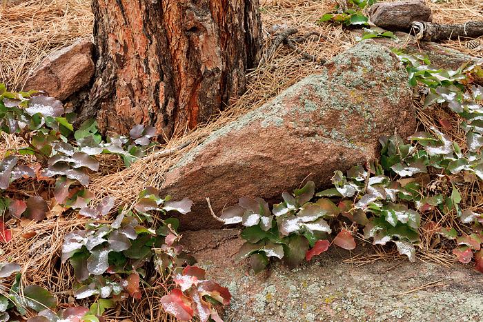 Boulder, Colorado, Open Space and Mountain Parks, Flagstaff Mountain, Snow, Holly, OSMP, photo