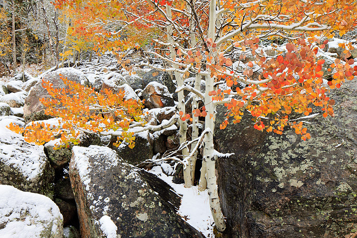 Rocky Mountain National Park, Colorado, Aspens, Autumn, Snow, Red,Estes Park,Bear Lake Road,RMNP,Landscape,Photography, photo