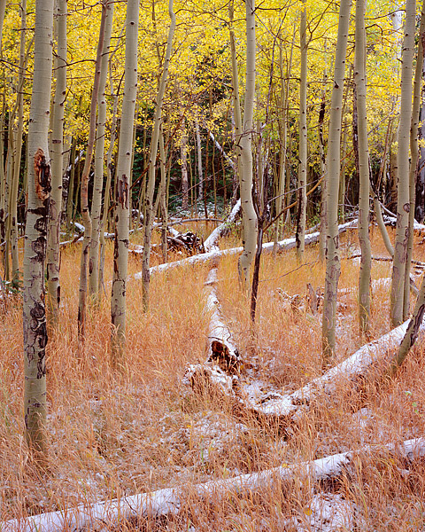 Storm Pass, Rocky Mountain National Park, Bear Lake, Estes Park, Aspens, fall color, photo