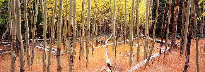 Colorado, Storm Pass, Rocky Mountain National Park, Aspens, Fall, photo