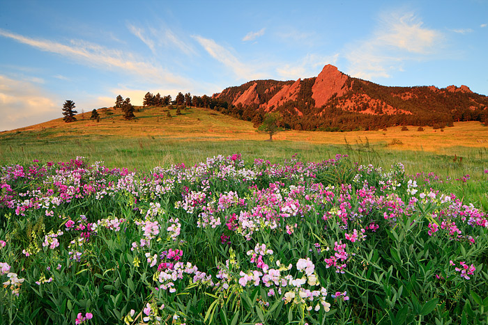 Boulder, Colorado, Chautauqua Park, Flatirons, Sweet Pea, Wildflowers, Sunrisse, Open Space, OSMP, photo
