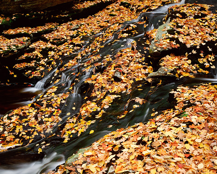 Harriman State Park, New York, Fall Color, Autumn, photo