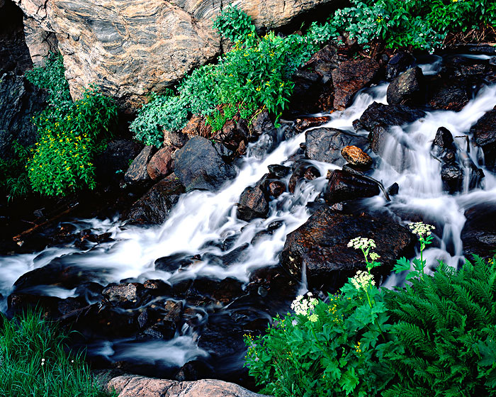 Rocky Mountain National Park, Tyndall Creek, Wildflowers, Colorado, Summer, photo