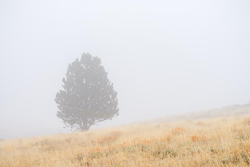Upper Beaver Meadows,RMNP,Estes Park,Rocky Mountain National Park,Colorado,Trees,Fog,March,Grasses,photography,landscape, photo