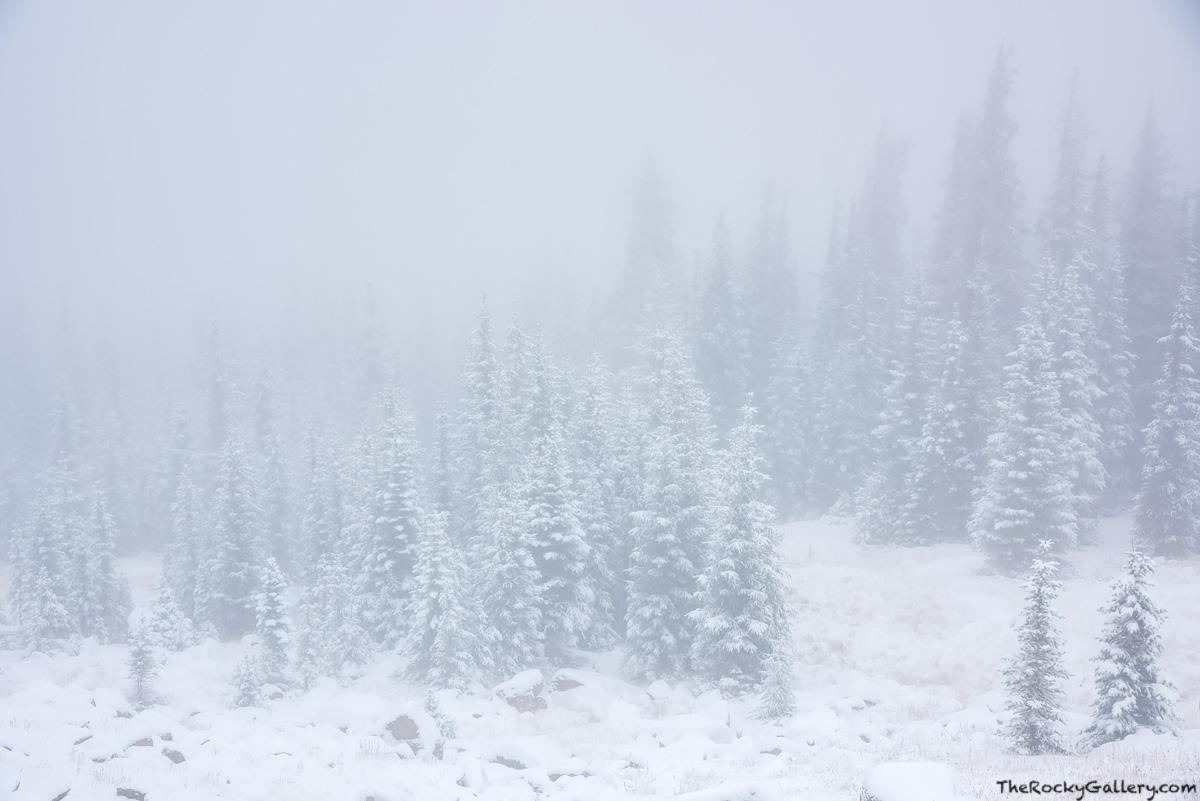 Trail Ridge Road,Estes Park,RMNP,Grand Lake,Rocky Mountain National Park,Colorado,Winter,Storm,Evergreens,Tree,Landscape,Photography,Ute Pass,October , photo