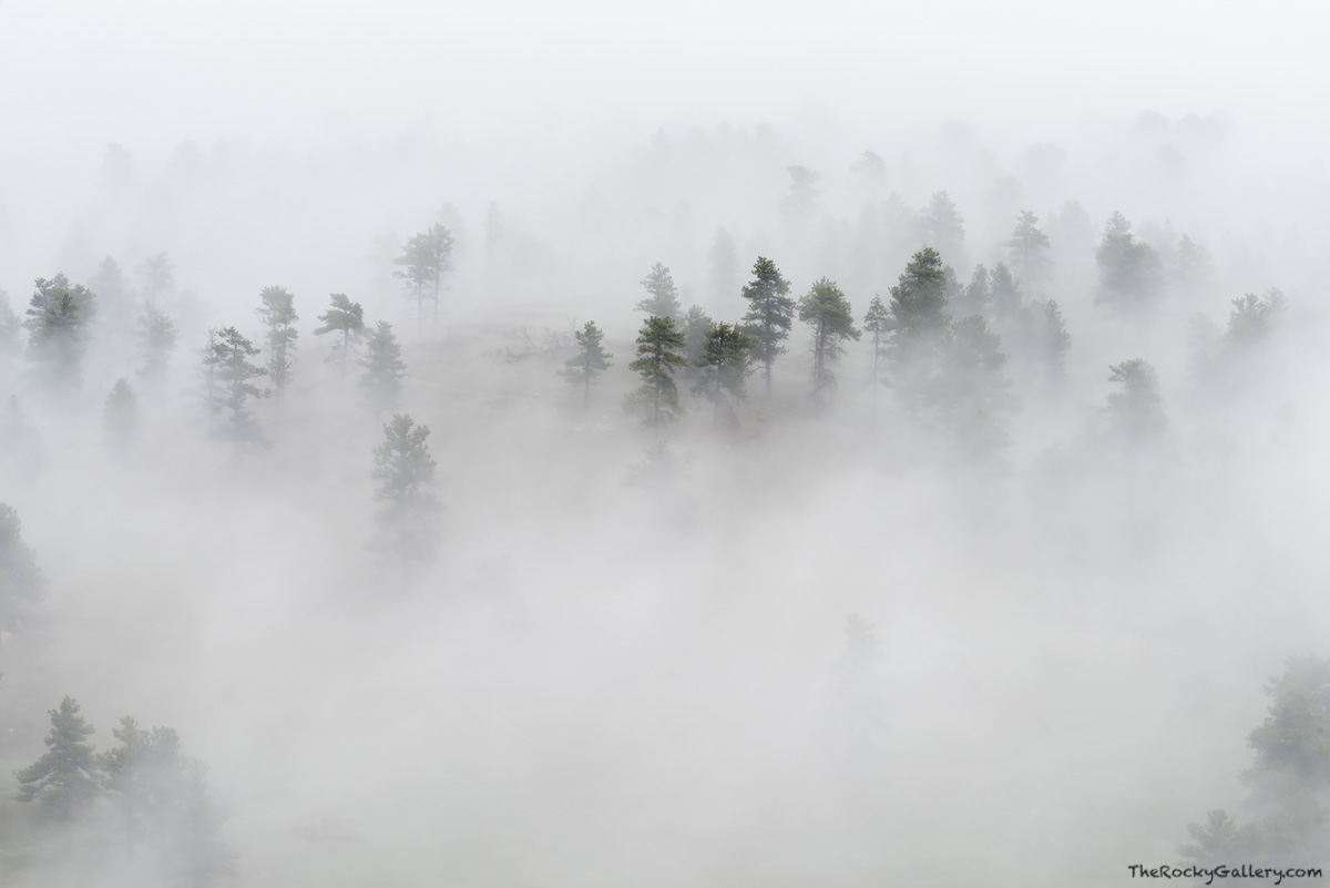 Fog,Moody,Landscape,Photography,Boulder,Colorado,Sunrise,May,Walker Ranch,Open Space,Boulder County,Trees,Ponderosa Pines,Flagstaff Road,OSMP, photo