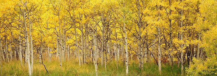 Maroon Bells, Aspen, Fall Color, Maroon Creek, photo