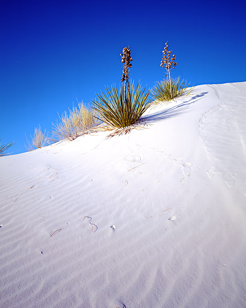 White Sands, National Monument, New Mexico, Sand Dunes, Gypsum, Yucca, photo