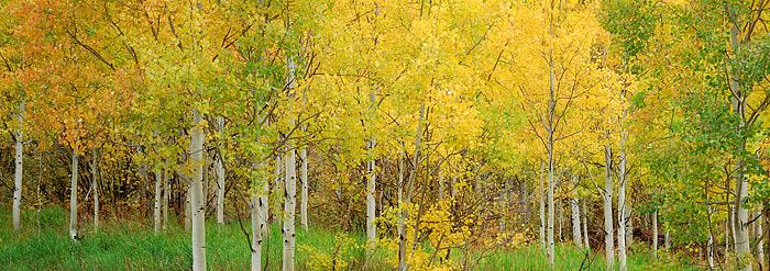 Aspens, Fall, Colorado, Maroon Creek, Maroon Bells, photo