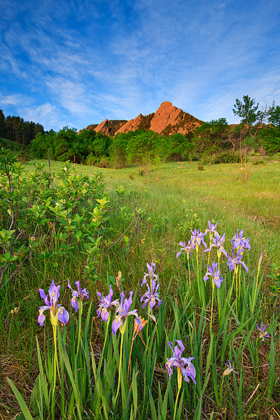 Boulder, Colorado, Chautauqua Park, Flatirons, OSMP, Open Space And Mountain Parks, Wilflowers, Iris, photo